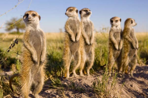 Video marketing builds a brand – From Meerkats to Opera Singers!